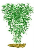 plantform stripestem fernleaf